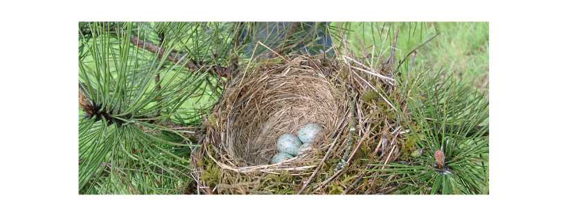 Birds Nesting in Chimney, Topcap, Bird guard